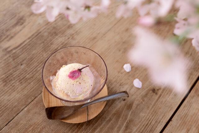 桜始開 桜アイスクリーム